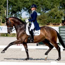 Dressage-Warmblood-For-Sale-Ziesto-x-Trento-B-1