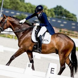 Dressage-Warmblood-For-Sale-Ziesto-x-Trento-B-2