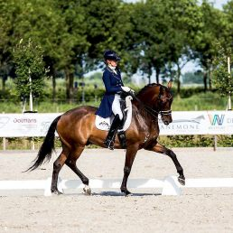 Dressage-Warmblood-For-Sale-Ziesto-x-Trento-B-3